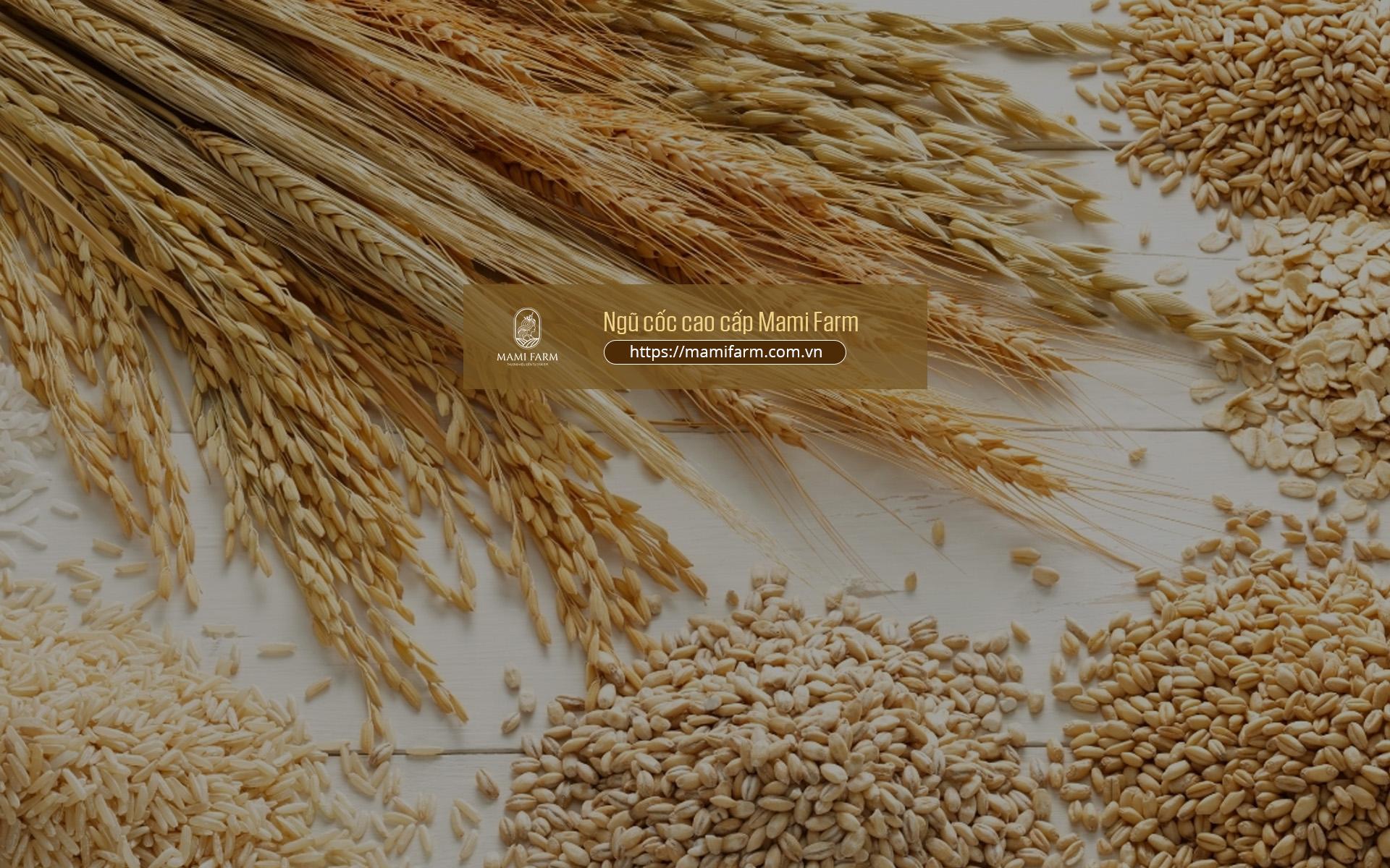 Tác dụng và cách dùng bột ngũ cốc như thế nào